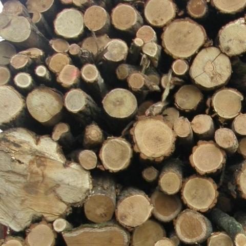 Tűzifa, fabrikett